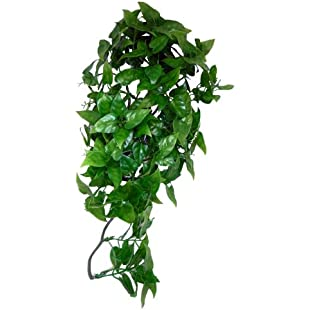 KOMODO Philodendron Plant, 40 cm:Kisaran