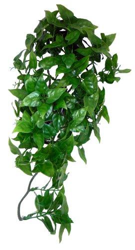 Komodo Philodendron Plant, 40 cm