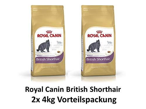 ROYAL CANIN British Shorthair | 2X 4kg Sparpackung