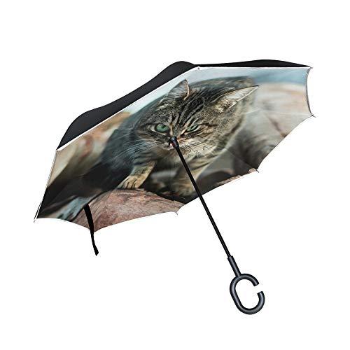 Fox Tabby kat bedrukte omgekeerde paraplu, dubbele laag omgekeerde paraplu automatische schakelaar, houten handvat Britse mode persoonlijkheid vouwen