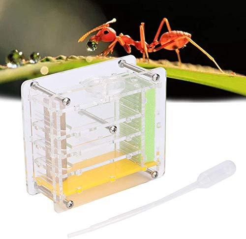 HEEPDD Hormiga acrílica Hormiga acrílica Villa de Insectos Caja Ornamental Ciencia Educativo Formicarium para Hormigas vivas