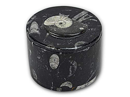Round Carved Black Pill Box / Jewllery Box / Desk Tidy with Ammonoids and Orthoceras Fossils throughout from Paleozoic Period 400million years- Di 8 H 4 Cm by Moroccan Fossils
