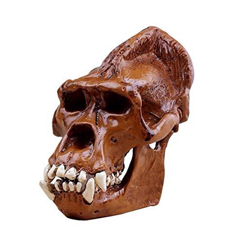 Zidao Orang-Utan-Schädel - Resin Figurine Schreibtisch Scientific Skulptur - Abnehmbarer Medizinische Lehre Modell, Wissenschaftliches Pädagogisches Spielzeug,Braun