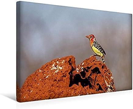 Premium Tessile della tela 45cm x 30cm Croce Fiamma testa della Barba Uccello su termite collina (tsavo, Kenia), 45x30 cm