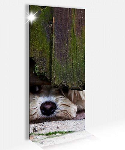Acrylglasbild 40x100cm neugieriger Hund altes Holztor Acrylbild Glasbild Acrylglas Acrylglasbilder 14A2556, Acrylglas Größe2:40cmx100cm