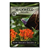 Sow Right Seeds Butterfly Milkweed Seeds; Attract Monarch and Other Butterflies to Your Garden; Non-GMO Heirloom Seeds; Full Instructions for Planting, Wonderful Gardening Gift (1)