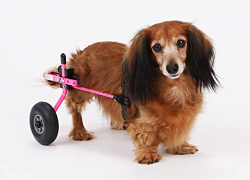 K9 Carts | The Original Dog Wheelchair |...