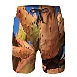 Benle Pantaloncini da Surf da Uomo,pianta di Aloe ferox sotto Il Cielo Blu,Costume da Bagno con Fodera in Rete ad Asciugatura Rapida 4XL