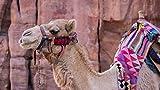 Puzzles personalizados 1500 piezas con foto y texto | Máxima calidad de impresión | Tamaño: 1500 piezas (87x57 cm) camello