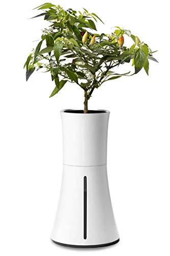 Senatis Botanium - Juego completo de plantas (incluye solución nutritiva, sustrato y recipiente para plantas con depósito de agua, versión europea), color blanco
