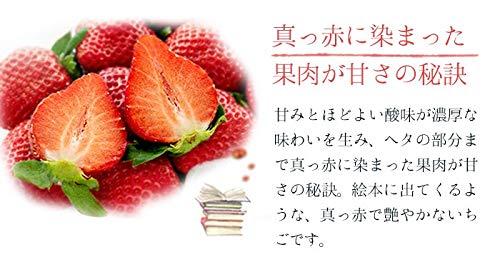 いちごさん秀品大粒4L~3Lサイズ240g×2パック佐賀県産JA佐賀白石地区苺イチゴ