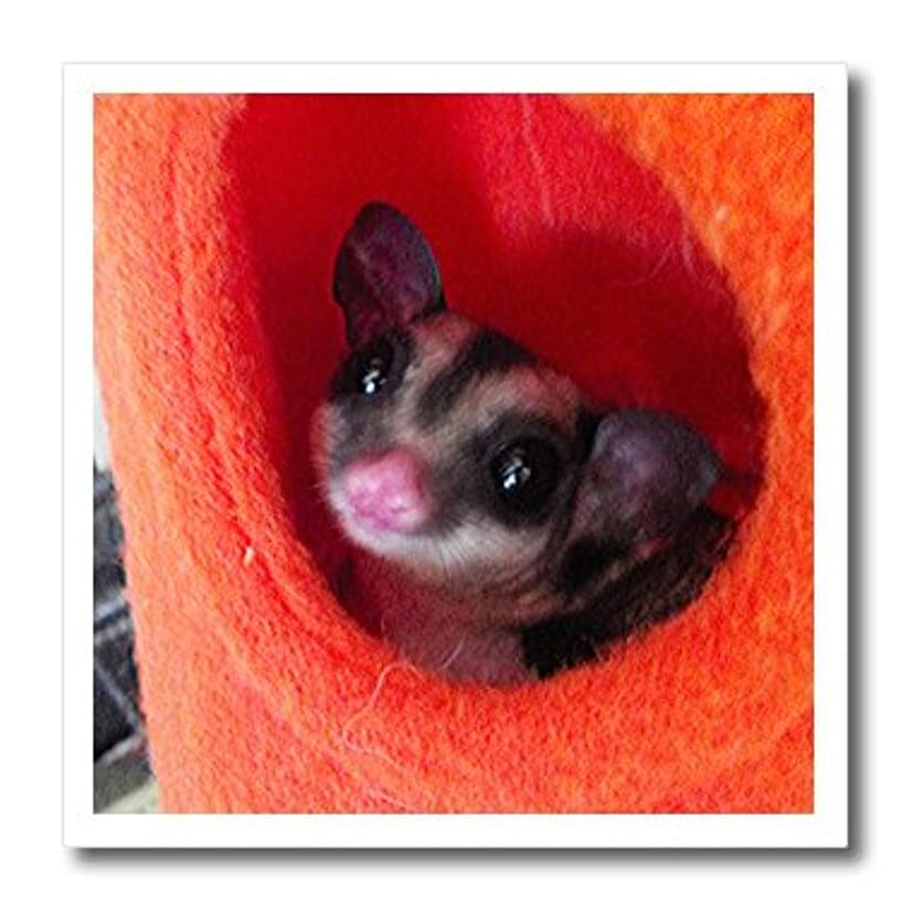 3dRose ht_107049_3 Sugar Glider in Orange Hanging Bed-Iron on Heat Transfer for Material, 10 by 10-Inch, White