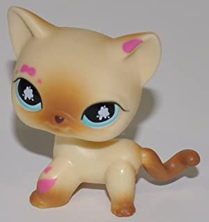 Shorthair Kitten #816 (Cream, Blue Eyes, Tan Deco, Siamese Paint on Head and Paws) - Littlest Pet Shop (Retired) Collector Toy - LPS Collectible Replacement Single Figure - Loose (OOP Out of Package & Print)