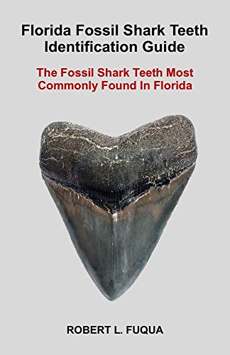 Florida Fossil Shark Teeth Identification Guide: The Fossil Shark Teeth Most Commonly Found In Florida