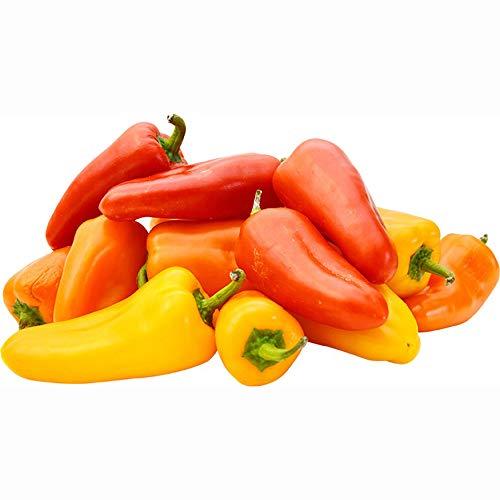 """""""旨甘すずなりミニパプリカ レッド&イエロー2色セットの苗""""【9cmポット自根苗/赤実&黄色実 セット販売 各色2ポット/合計4ポット】実を小さくし、1株から沢山収穫できるように品種改良されたミニパプリカです。完熟すると美しい色になる甘みのある美味しいミニパプリカです。背丈は低めで、6号鉢ぐらいの鉢植えでコンパクトに育てることも可能。畑植えにすると背丈は80~100cm程度になりますが、普通のピーマン品種より背も低く幅もコンパクトです。支柱は必要です。果形はくさび型、果長は摘果の仕方にもよりますが約6~8cmです。普通のベル型パプリカ品種は家庭菜園レベルで育てると1株に数個しか実が出来ない場合がありますが、すずなりミニパプリカは肥料切れさせずにうまく育てると20~30個程度収穫できる多収穫タイプです。実が色づくのは毎年の積算日照によりますので、日当たりが重要です。色づくまでは実がついてから約1か月かかります。近くに辛いとうがらし品種を植えたり、強い水切れなどストレスを与えると実が辛くなることがありますのでご注意ください。自社農場から新鮮出荷!【即出荷】"""