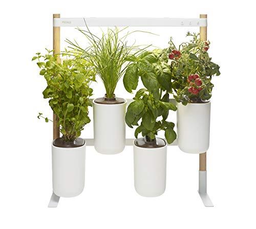Prêt à Pousser ❃ Modulo, Votre Potager d'intérieur évolutif ❃ (Inclus capsules : Basilic Grand Vert, Menthe Marocaine, Ciboulette, Mini Tomates)