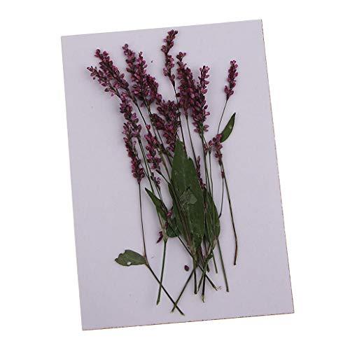 FLAMEER 12 Piezas de Semillas Secas Reales Naturales Flores Hojas Flores Prensadas para Arte Floral