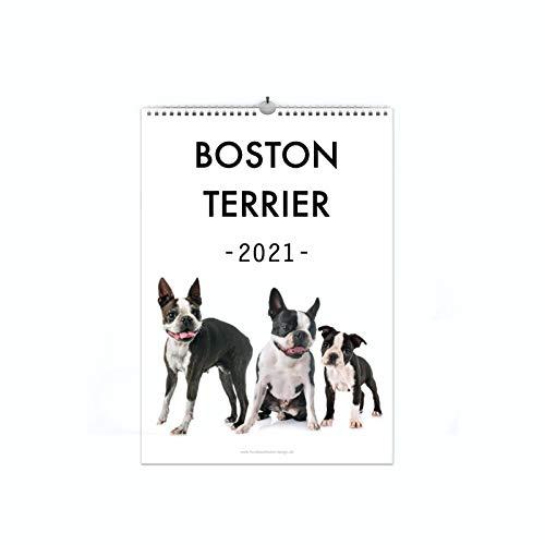 Boston Terrier Kalender 2021 | A4 Hunde Wandkalender Fotokalender Hunderassen