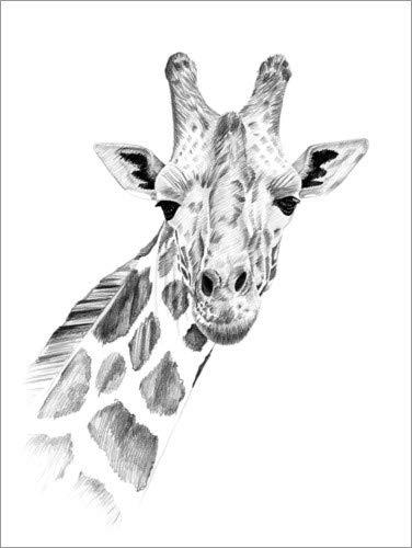 Posterlounge Hartschaumbild 60 x 80 cm: Giraffe Skizze von Editors Choice