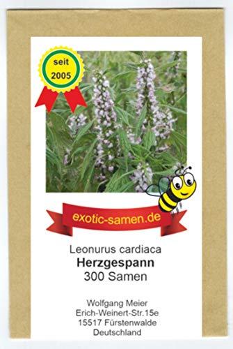 Herzgespann - Leonurus cardiaca - Zier- / Arzneipflanze - Bienenweide - 300 Samen