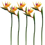 Calcifer 32'' Real Touch Bird of Paradise Artificial Flowers Bouquet for Home Garden Decoration/Wedding Party Decor Orange (Package Quantity: 5 Stems)