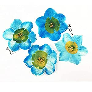 Artificial and Dried Flower Blue Narcissus Diameter 4CM OME Est Supply Real Pressed Flowers for P O Arrangements 80 Pcs – ( Color: Blue 4CM )