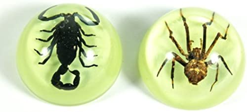 1.5 Scorpion & Spider Magnets 2 pc Set by REALBUG