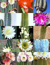 Cereus Cactus Mix, Rare Night Garden Cacti Exotique Désert Succulent graines 50 graines