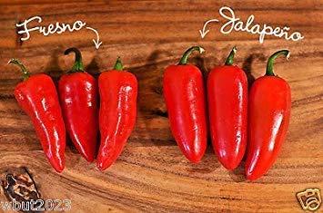 """GEOPONICS 30 Fresno Chili Pepper Samen (organisch) Ã""""hnlich wie die Jalapeno, aber viel Hotter"""
