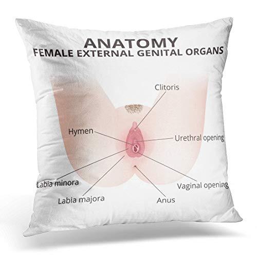 Hymen Die Struktur der weiblichen äußeren Genitalien Medizinische Anatomie Vagina Sexualsystem Wohnkultur Quadrat Innen/Außen Kissenbezug, 18X18 In