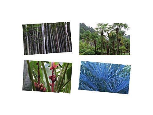 Winterharter Exoten Mix ☆ Bananen, Palmen & Bambus ☆ 60 Samen