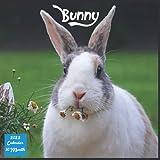 Bunny 2022 Calendar: Official Rabbit Calendar 2022, 16 Month Square Calendar