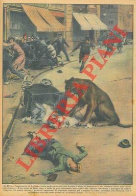 La Mostra Campionaria di Lubiana aveva mandato in giro per la citta', a scopo di propaganda, una leonessa tenuta alla catena dal domatore. D'un tratto la leonessa fuggi.......