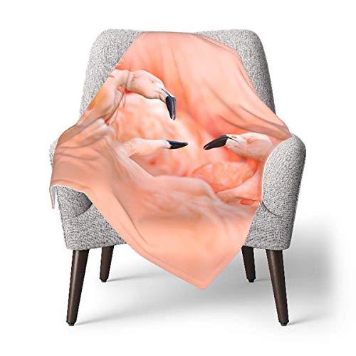 Ahdyr Manta de Tiro para bebé Super Suave Fight of American Flamingos Manta de bebé Suave Manta de guardería para Cochecito, Cama para niños pequeños de 30 x 40 Pulgadas