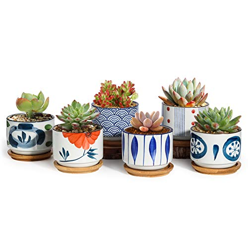 T4U 3 Inch Succulent Pots Japanese Style Collection with Bamboo Saucer Set of 6, Small Ceramic Plant Planter Cactus Flower Container Aloe Holder Indoor Home Office Decoration Christmas Wedding Gift