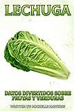 Lechuga (Datos Divertidos Sobre Frutas y Verduras)