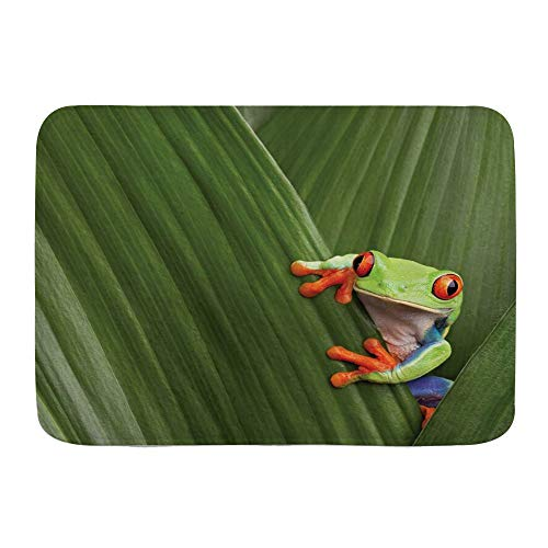 FOURFOOL Alfombrilla de Baño,Animal Rana arborícola de Ojos Rojos escondidos en Hojas de Macro exóticas en la Selva Tropical de Costa Rica Foto de Naturaleza Tropical,Alfombra Baño Absorbente