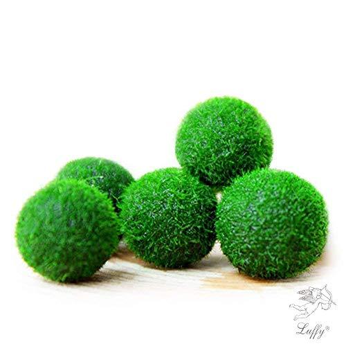 Luffy Nano Moss Balls, 5 boules de mousse, Pour les aquariums en eau de mer