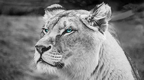 GAGALAM DIY Malen Nach Zahlen Kinder Für Erwachsene Anfänger Blauäugige Löwin Leinen Leinwand Acryl Anzahl Malerei Geschenke Rahmenlos 40x50cm