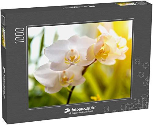 fotopuzzle.de Puzzle 1000 Teile Orchideen exotische Blume im tropischen Garten Sonnenuntergang Ton - Frühlingssonne Tag für Blumen Postkarte
