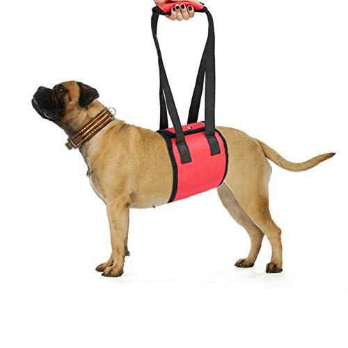 EtophHigh hondenriem met polsband, sluiting van nylon, beschermingsmaat voor huisdieren, zwart/rood/blauw, S/M/L, L, Rood