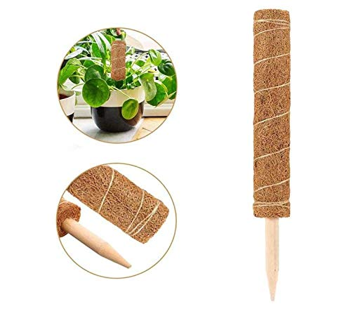 MiXXAR Pflanzstab Kokos 45cm Atürlicher Kokosfaser Pflanzenhalter Rankstab Rankhilfe Blumenstab Kokosstab Moosstab Kokosstab Totem Stange Für Pflanzenunterstützung Klettern Zimmerpflanzen Creepers