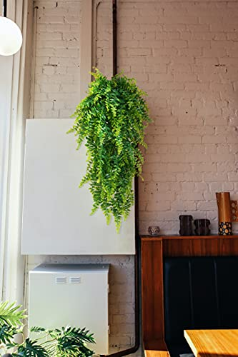 Anforsun Plantas