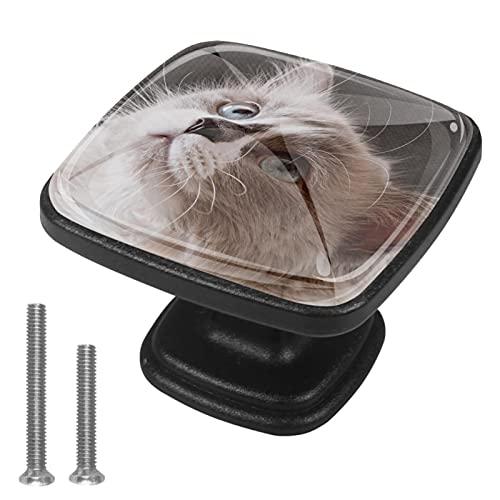 Tirador para Muebles Gatito bonito Manija del cajón cristal Perilla de cajón...