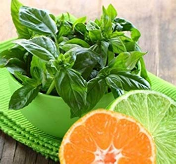 150 Lime Basil seeds Grow your own herb ez grow Heirloom CombSH L26