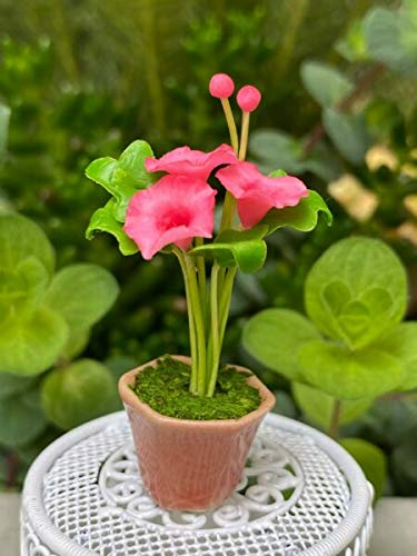 NIMIBOD - Fairy Gardens Accessories, Statues and Lawn Ornaments Supplies for Miniature Dollhouse Fairy Garden ~ Pink Morning Glories Flowers in Peachy Pot DIY for Miniature Fairy Garden Accessories