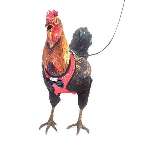 Yesito Hühnergeschirr für Hühner, mit 1,8 m passender Leine – verstellbar, belastbar, bequem, atmungsaktiv, große Größe, geeignet für Hühner mit einem Gewicht von ca. 1,8 kg, Rot