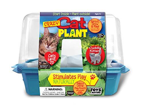 Crece tu propia planta de zacate gatera – brota y crece en una semana – gatos Love It – incluye bolsa de lino para hacer una...