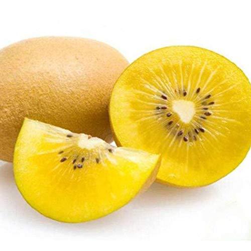 ADOLENB Seed House - Planta trepadora Árbol corazón amarillo/rojo kiwi Semillas de kiwi frutal Semillas