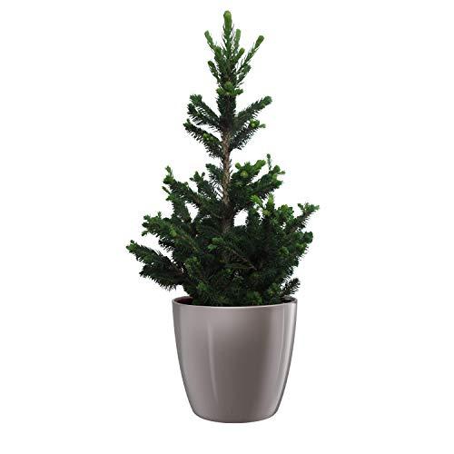 Hellogreen Zimmerpflanze - Kleine...